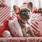 countdown al Natale