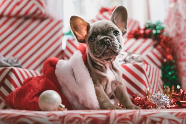 Quanto Manca Al Natale.Countdown Al Natale 2019 Quanto Manca Per La Festa Piu Amata Dell Anno